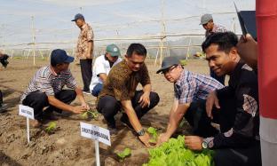 Kebon Ajong Gayasan Mulai Tanam 500 Hektar Tembakau Berkualitas Dunia