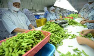 Mitratani Dua Tujuh, produsen edamame terbesar di Indonesia