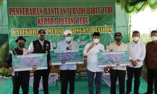 Dukung Petani Tebu, PTPN X Subsidi Bibit Unggul Untuk 385 Petani